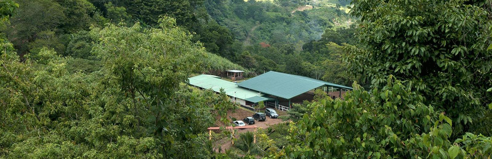 vegetacion-andares-caballos